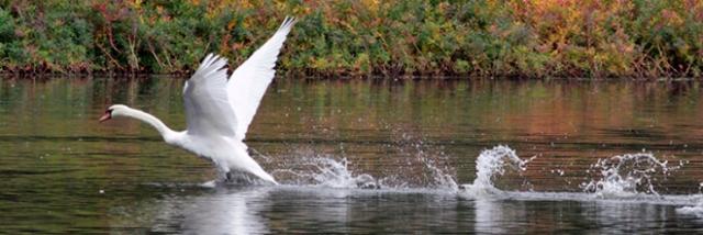 takeoff Copyright Jeffrey Foltice